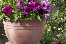 Flower Pot - Briar Patch Inn - Sedona Arizona - Cozy Cabins in Oak Creek Canyon