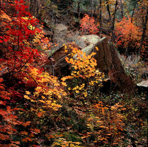 Hikes - Westfork Canyon - Briar Patch Inn - Sedona Arizona - Cozy Cabins in Oak Creek Canyon
