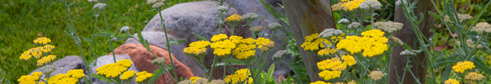 Wildflowers - Briar Patch Inn - Sedona Arizona - Cozy Cabins in Oak Creek Canyon